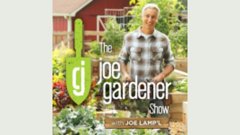 077-The Beauty and Importance of Native Plants: The Ethos of Mt. Cuba Center from The joe gardener Show - Organic Gardening - Vegetable Gardening - Expert Garden Advice From Joe Lamp'l