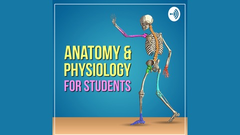 Anatomy Physiology For Students Listen Via Stitcher For