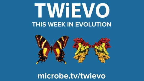 TWiEVO 53: Virus evolution by land and by sea and by CoV, part II from This Week in Evolution
